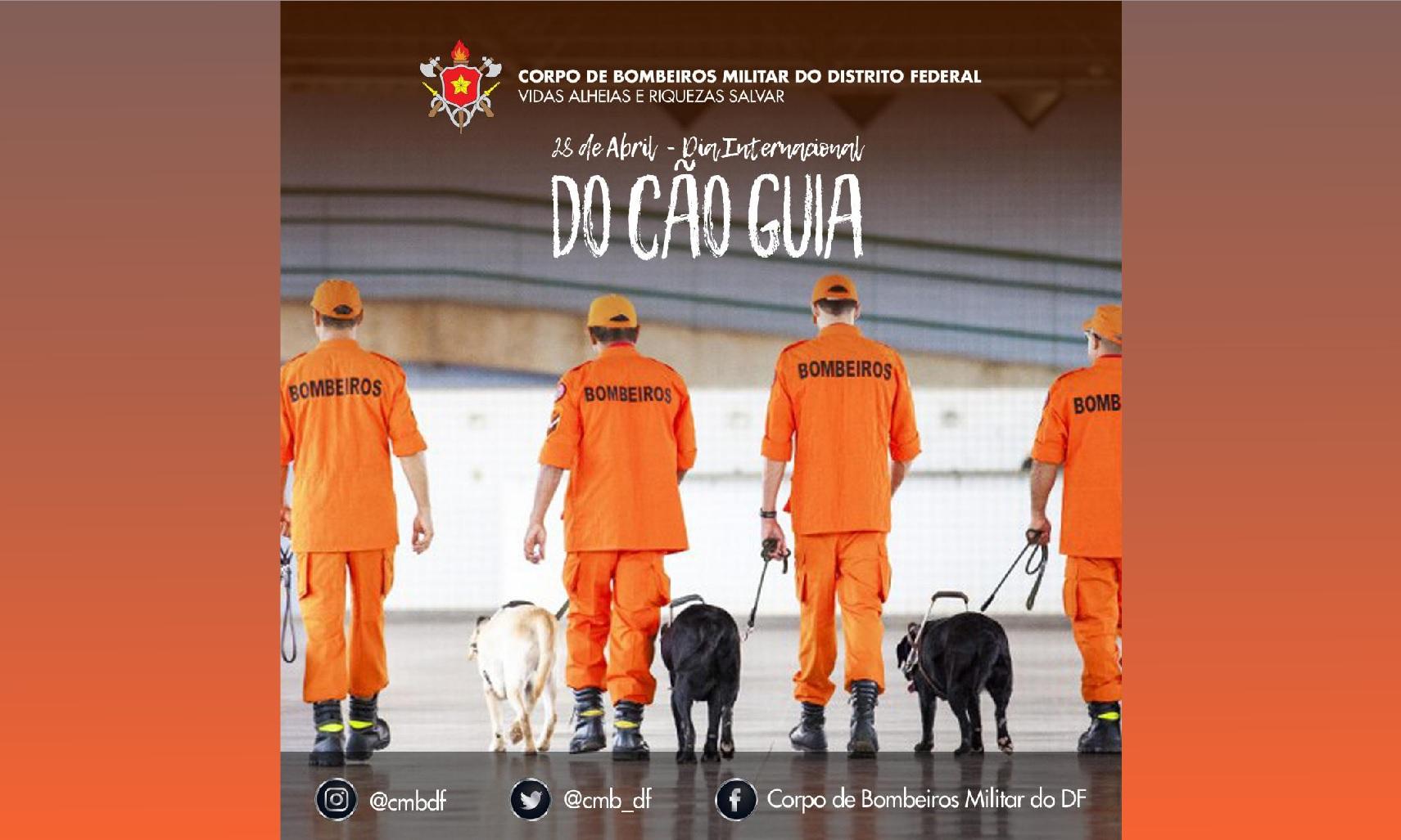 Dia internacional do Cão Guia – 28 de abril